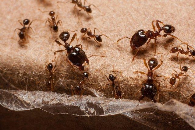Чего бояться муравьи чем их отпугнуть