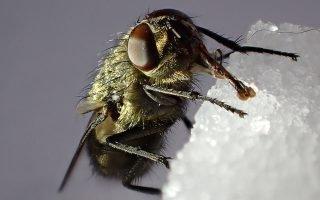 Как победить в борьбе с мухами в жилых помещениях