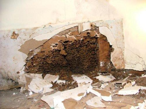 Гнездо муравьев в доме