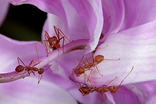 Как избавиться от муравьев в квартире быстро, просто и навсегда