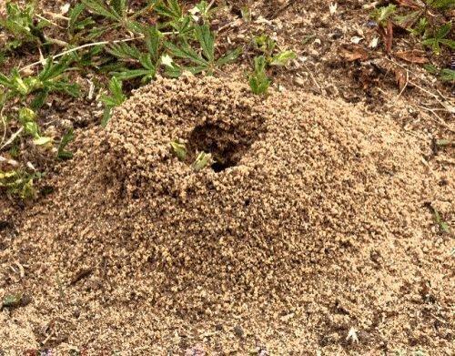 Небольшой муравейник