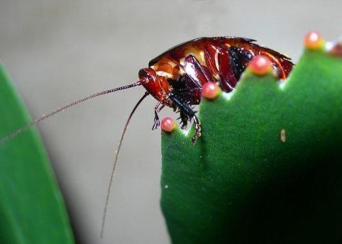 Таракан на растении