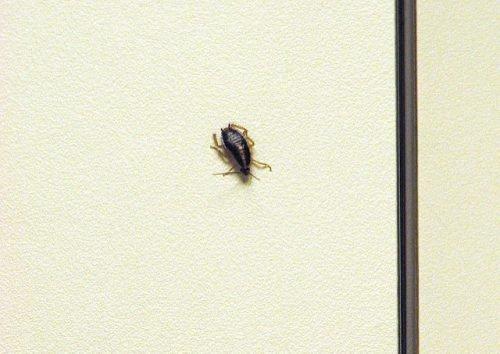 Таракан на стене