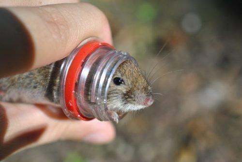 Ловушка для мышей из бутылки