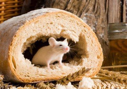 Мышь в буханке хлеба