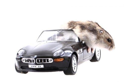 Мышь в машине