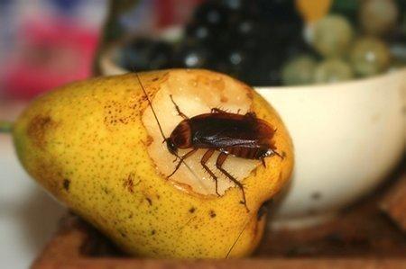 Таракан на груше
