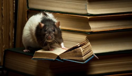 Умная крыса