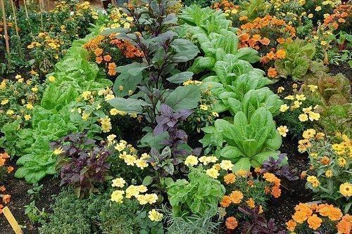 Паутинный клещ на огородных растениях