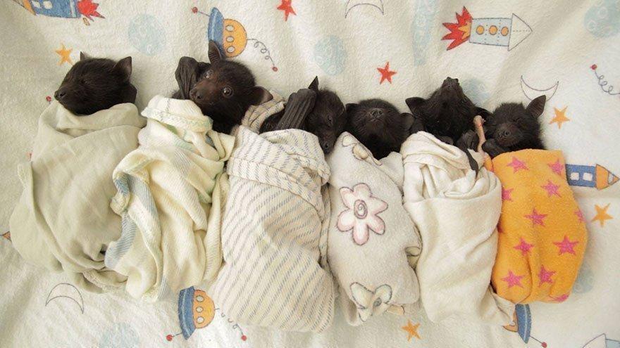 Дети летучих мышей