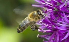 Как избавляются от диких пчел дома