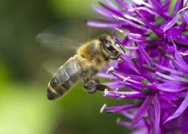 Как избавиться от диких пчел в стене дома