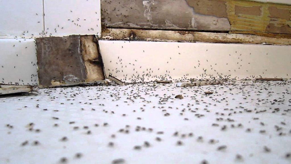 Гнездо муравьев