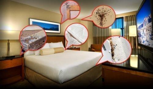 Клопы в отелях
