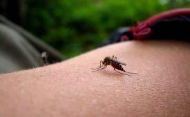Как в доме уничтожить комара
