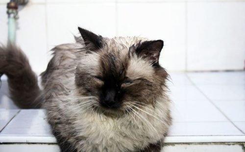 Кот в клее для мышей