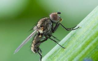 Рекомендованные средства от луковой мухи