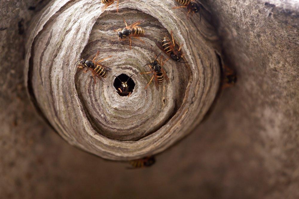 Как избавиться от ос если не видно гнезда