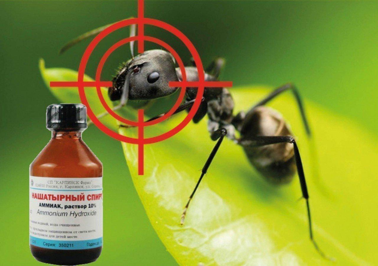Нашатырный спирт и муравей