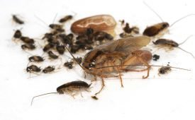 Как избавиться от вредоносных тараканов?