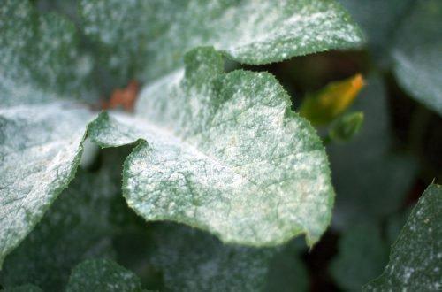 Плесень на комнатных растениях