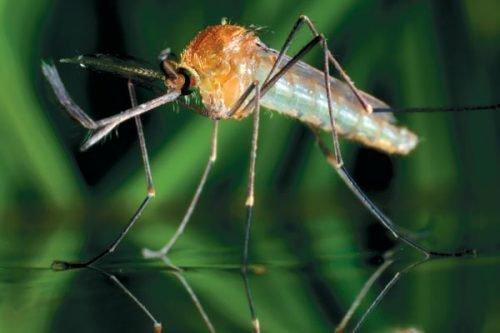 Комар и вода