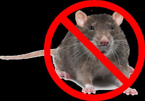 Борьба с мышами