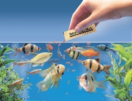 Кормление рыбок в аквариуме