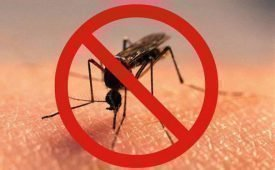 Препараты от комаров, изготовленные собственноручно