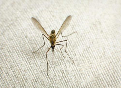Комары в доме