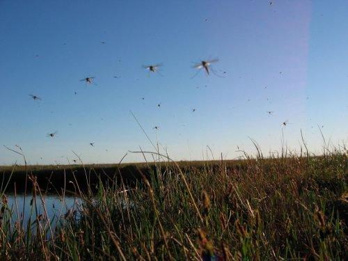 Отдых на природе и комары