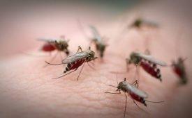 Домашние средства от комаров и мелких мошек