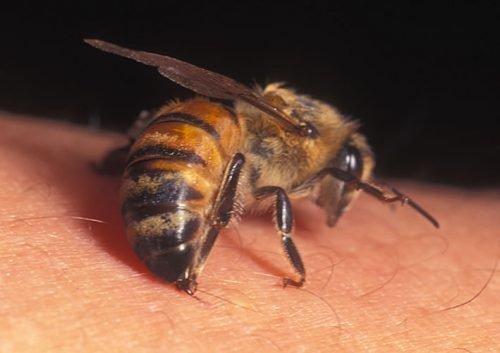 Укус осы