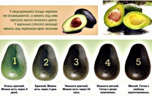 Выбор авокадо