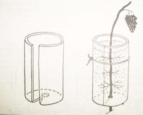 Хранение в воде с лозой
