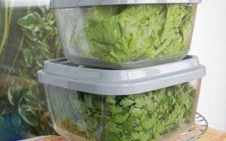 Эффективные методы хранения зелени в холодильнике