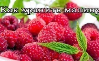 12 советов по продолжительному хранению малины