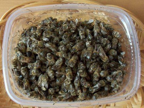 Хранение пчелиного подмора