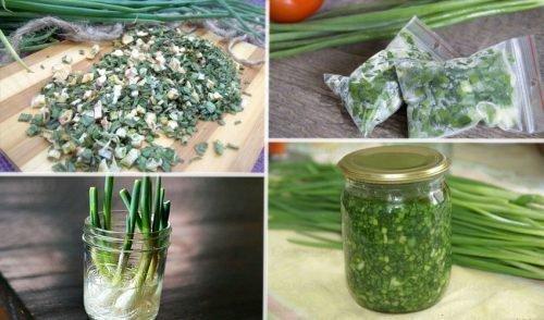 Как хранить зеленый лук