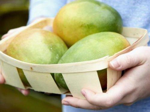 Неспелые манго
