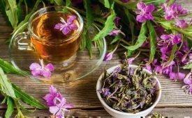 Как сделать вкусный и полезный сбор из иван-чая
