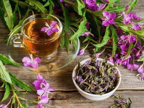 Заготовка и хранение иван-чая