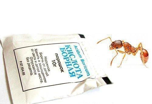 Борная кислота от муравьев