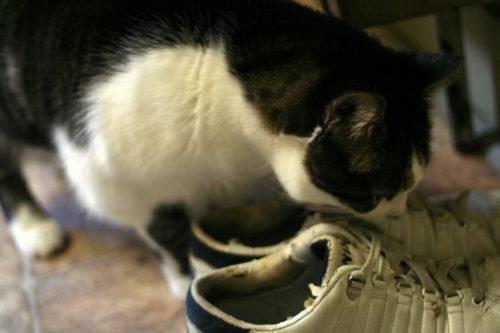 Кот метит ботинки