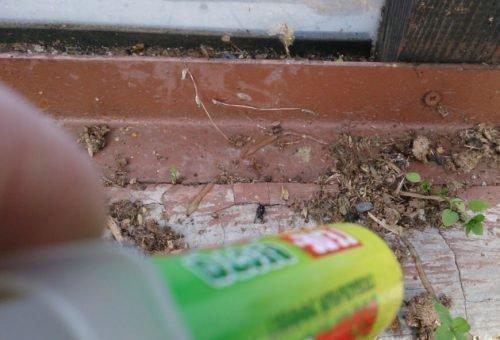 Инсектицидные гели от муравьев