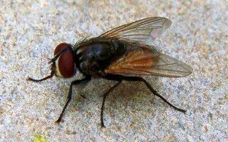 Как эффективно и быстро избавиться от нежеланного соседства с мухами
