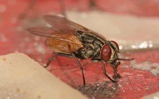 Почему в квартире много мух? Откуда они берутся?
