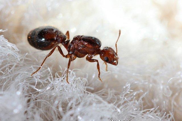 от чего появляются паразиты в организме