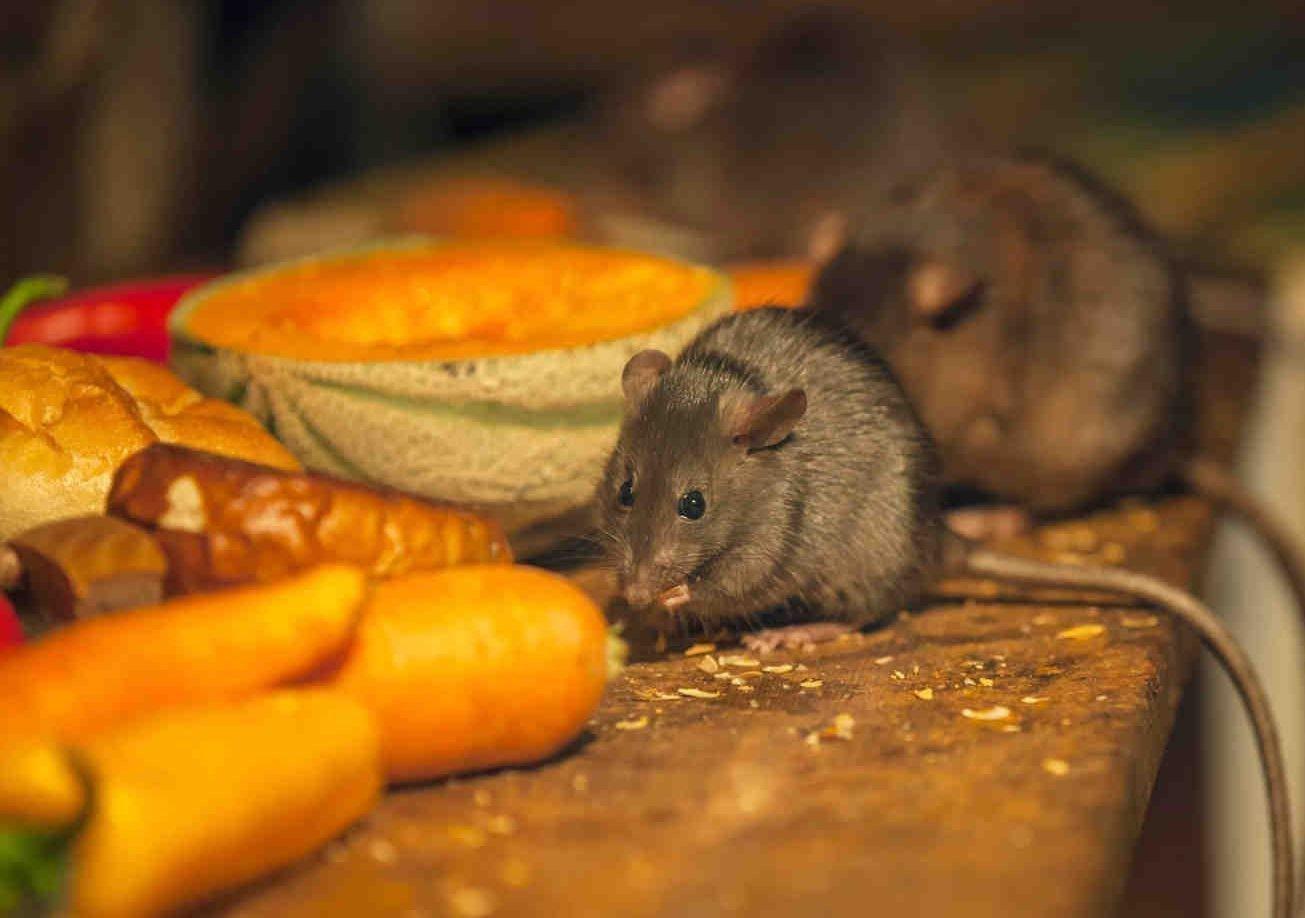 Средства от мышей в домашних условиях