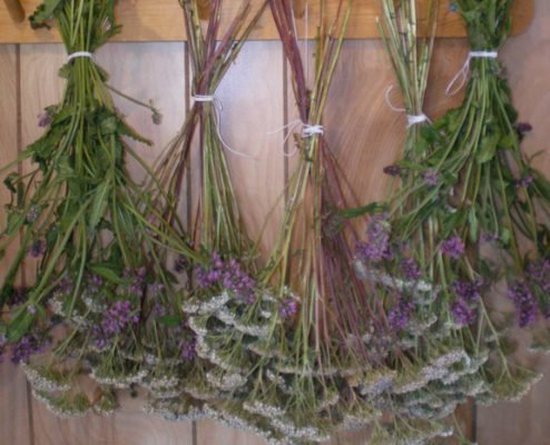 Сухие травы от моли